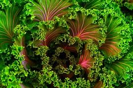 plant-690051__180